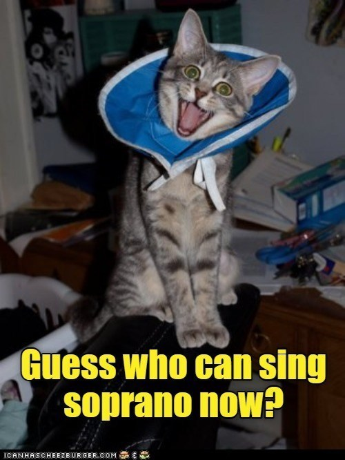 Cat - Guess who can sing soprano now? IOANHASCHEEZBURGER.COM Se