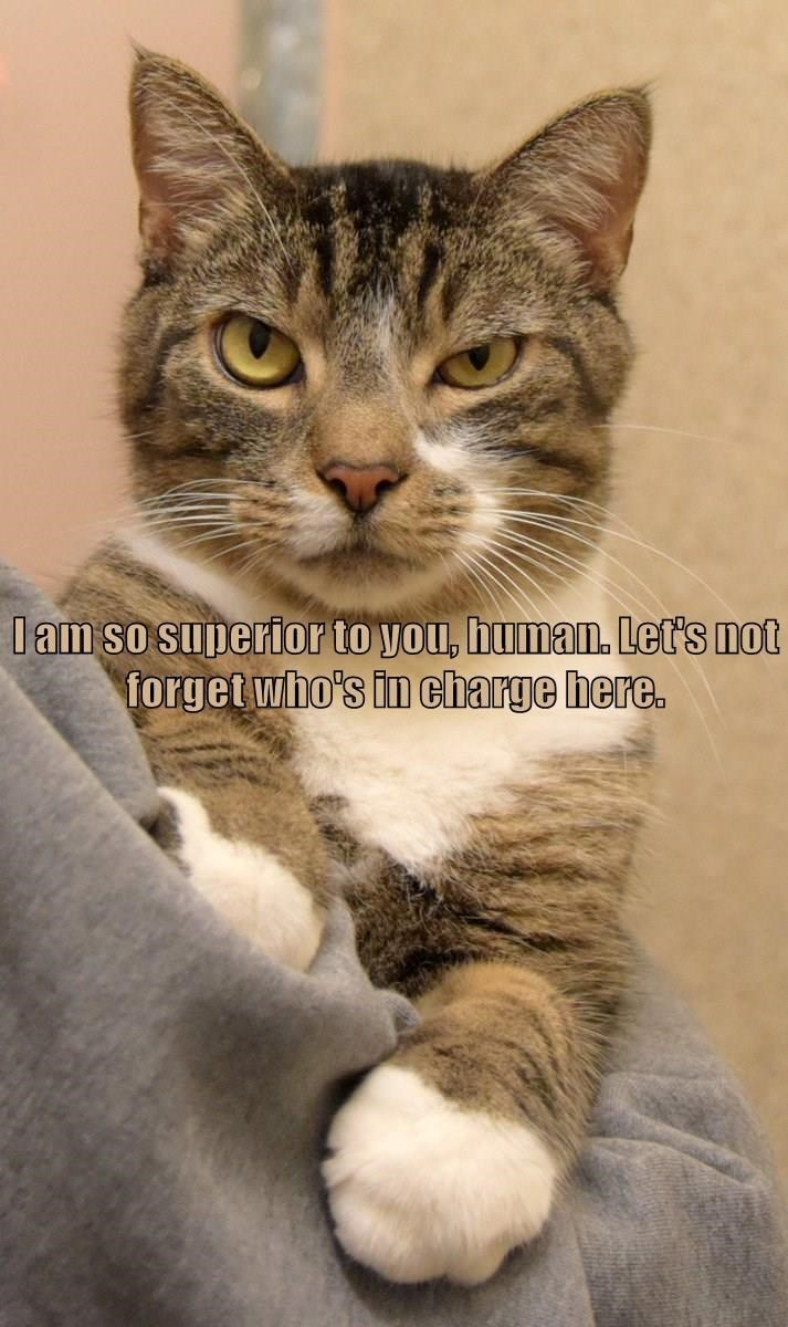Cat - lam so superior to you, human. Let's not forget who's in charge here.