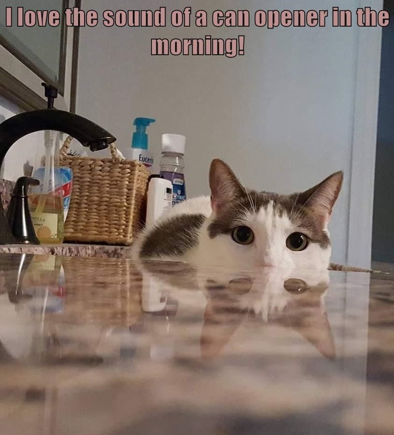 Cat - I love the sound of a can opener in the morning! Euceri