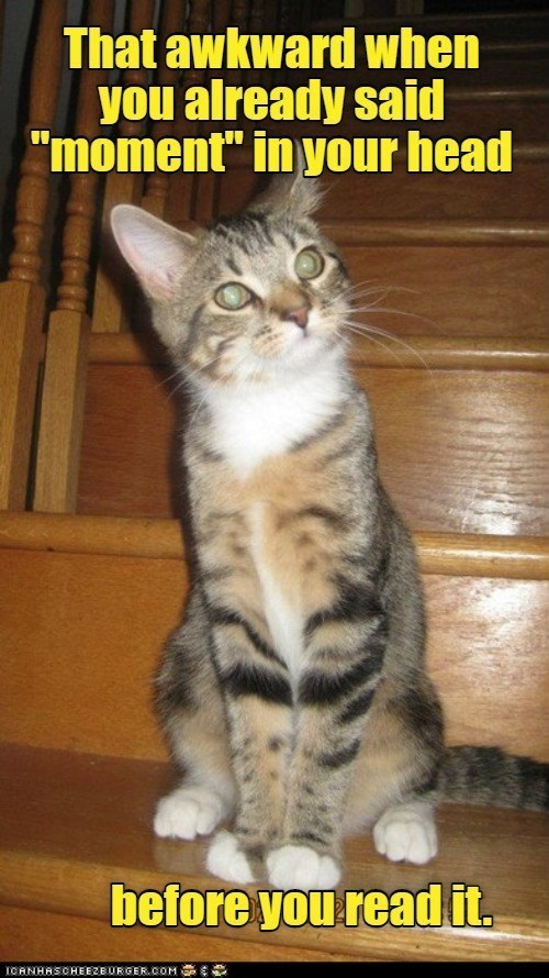"""Cat - That awkward when you already said """"moment"""" in your head before you read it. ICANHASCHEEZBURGER.COM"""
