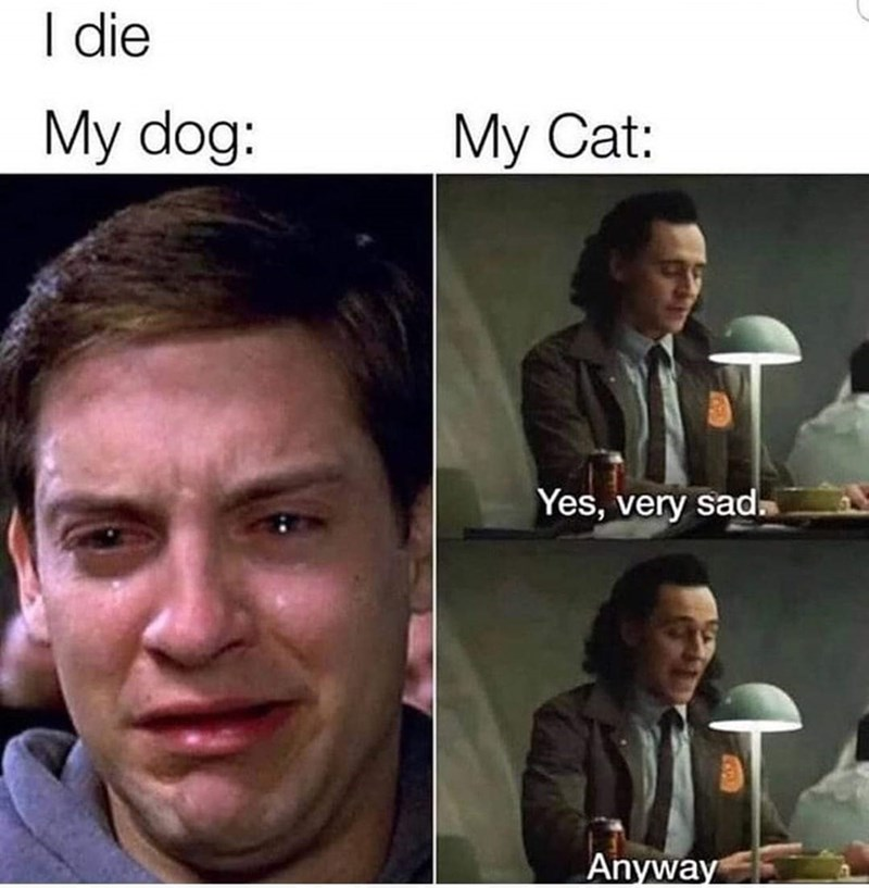 Forehead - I die My dog: My Cat: Yes, very sad. Anyway