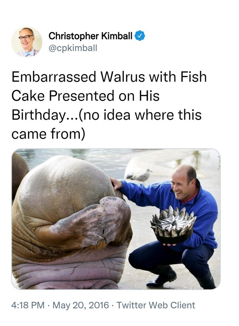 Sleeve - Christopher Kimball @cpkimball Embarrassed Walrus with Fish Cake Presented on His Birthday...(no idea where this came from) •.. 4:18 PM · May 20, 2016 · Twitter Web Client