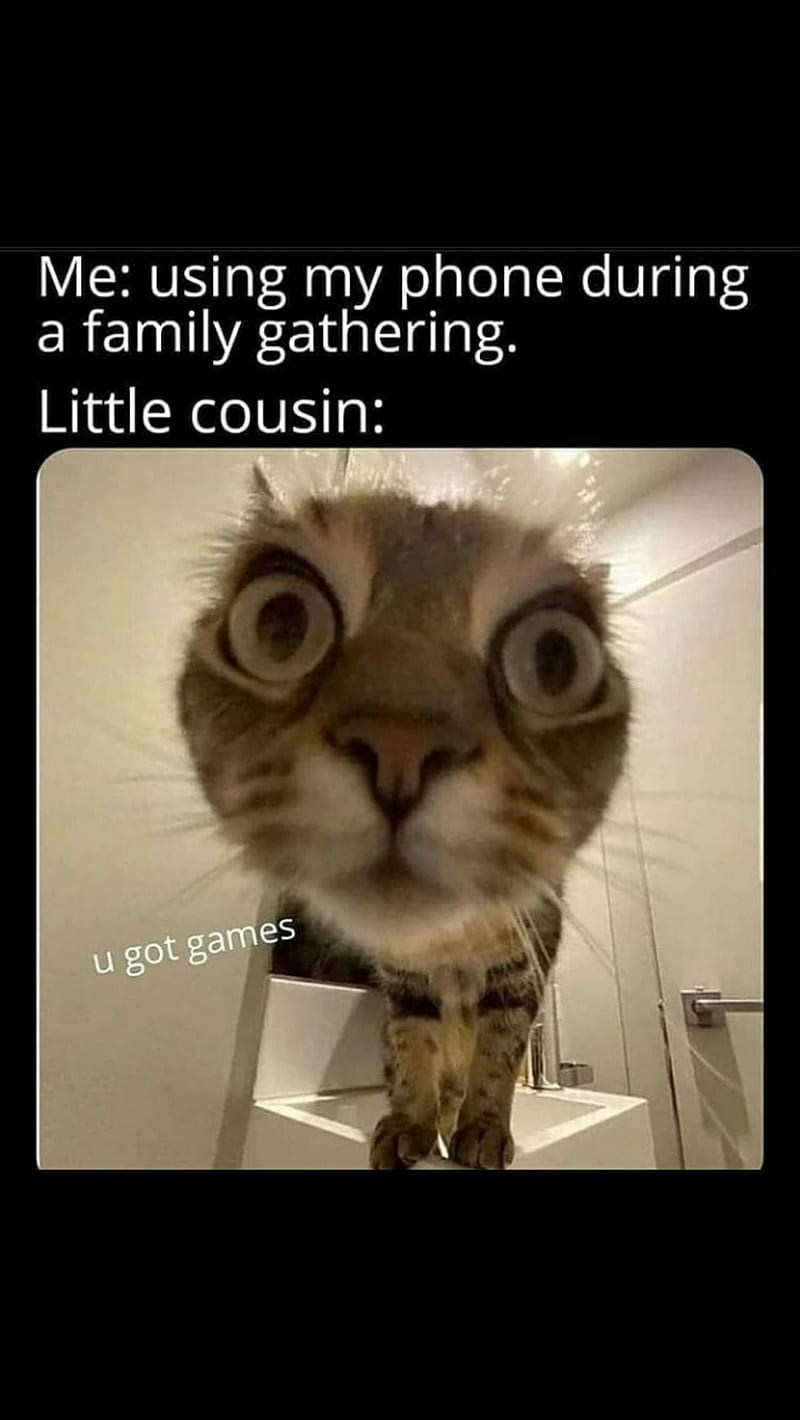 Cat - Me: using my phone during a family gathering. Little cousin: u got games