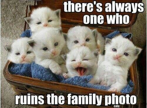 Cat - there's always one who ruins the family photo cata