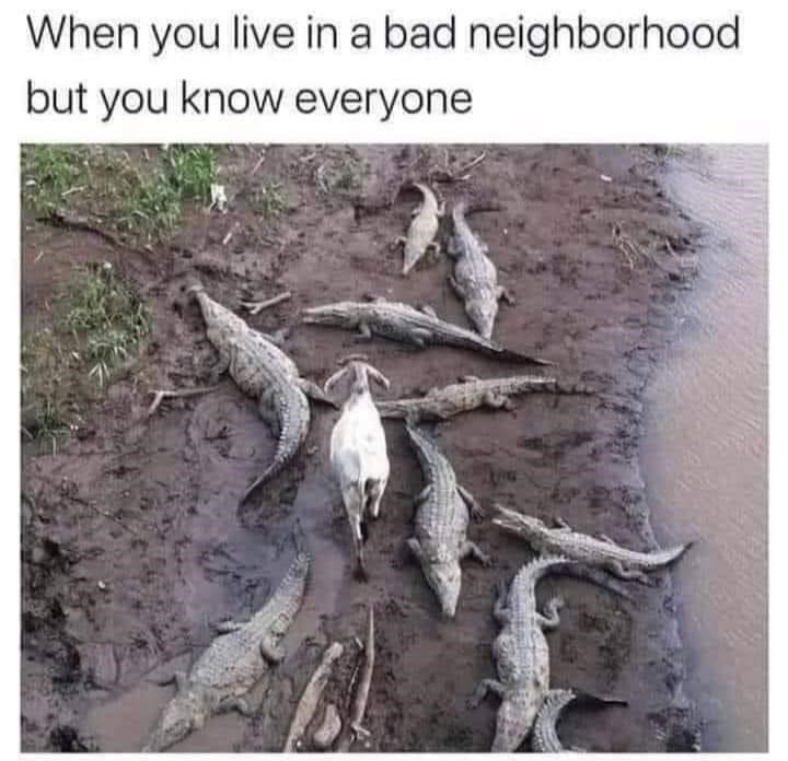 Nature - When you live in a bad neighborhood but you know everyone