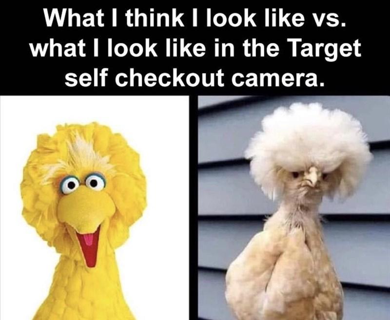 Vertebrate - What I think I look like vs. what I look like in the Target self checkout camera.