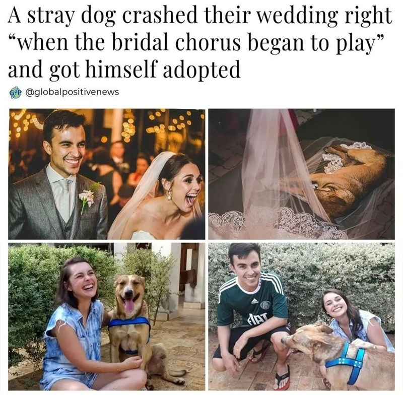 """Photograph - A stray dog crashed their wedding right """"when the bridal chorus began to play"""" and got himself adopted 99 @globalpositivenews"""