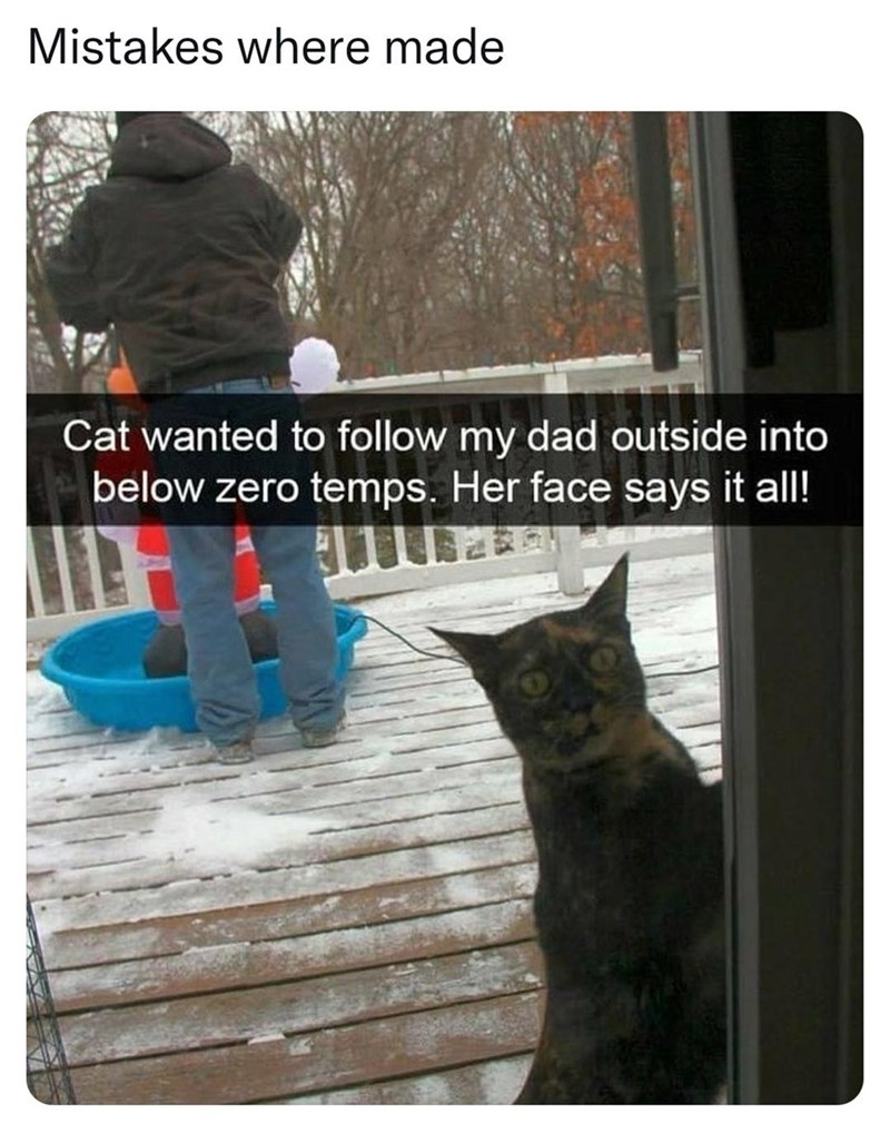 Cat - Mistakes where made Cat wanted to follow my dad outside into below zero temps. Her face says it all!