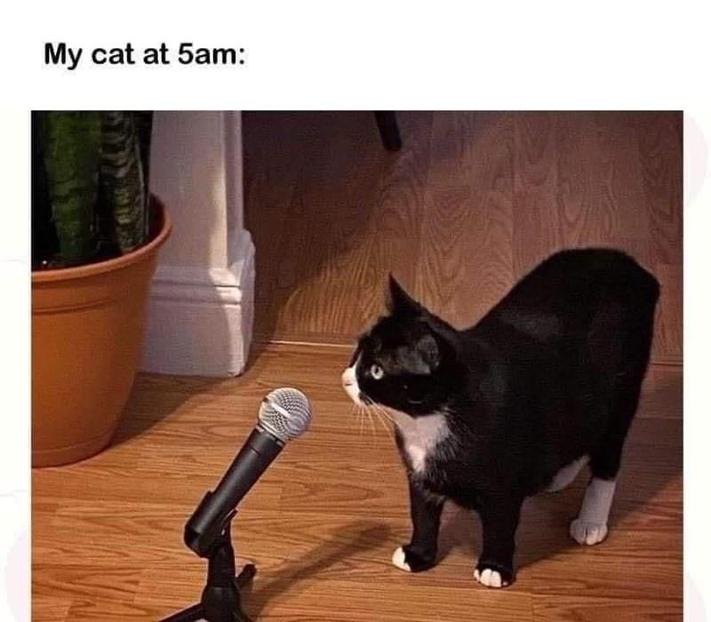Cat - My cat at 5am: