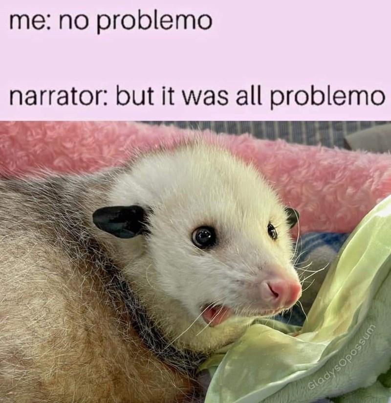 Carnivore - me: no problemo narrator: but it was all problemo Gladysopossum
