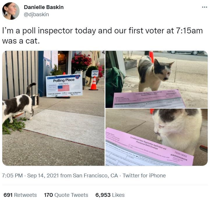 Cat - ... Danielle Baskin @djbaskin I'm a poll inspector today and our first voter at 7:15am was a cat. Polling Place Vote Here Lugang ounan Canditional vor Ragistration Application and Provisional Ballot Envelpe 793519052 7:05 PM Sep 14, 2021 from San Francisco, CA Twitter for iPhone 6,953 Likes 691 Retweets 170 Quote Tweets