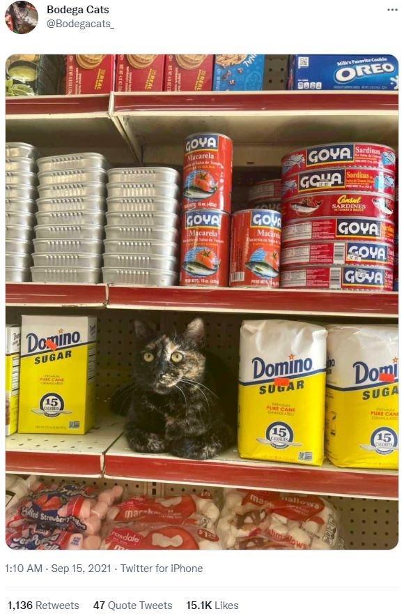 Food storage - Bodega Cats @Bodegacats_ Miles F uCo OREO 9868 GOVA Sardinas GOYA Macarela Sardinas. GOHA Contut SARDINES ENTOMATO AUDE GOVA GOU GOVA COVA Macarela Ma GOVA E Donino SUGAR Domino Domi PORE CANE SUGAR SUGA 15 PURE CANE GRANLAND PURE CANI S 15 15 CLORIES ma allows ted Streuber mar-h POadale Mows 1:10 AM - Sep 15, 2021 - Twitter for iPhone 1,136 Retweets 47 Quote Tweets 15.1K Likes REAL EREAL 2REAL