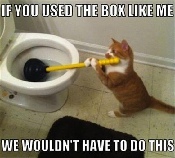 Cat - IF YOU USED THE BOX LIKE ME WE WOULDN'T HAVE TO DO THIS