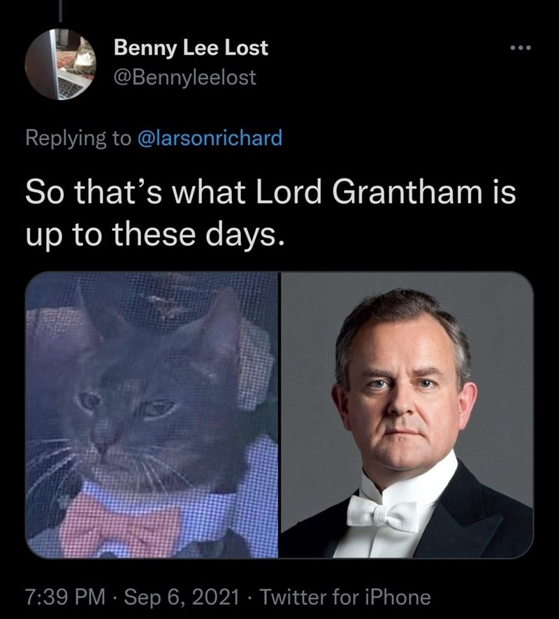 Forehead - Benny Lee Lost @Bennyleelost Replying to @larsonrichard So that's what Lord Grantham is up to these days. 7:39 PM · Sep 6, 2021 · Twitter for iPhone