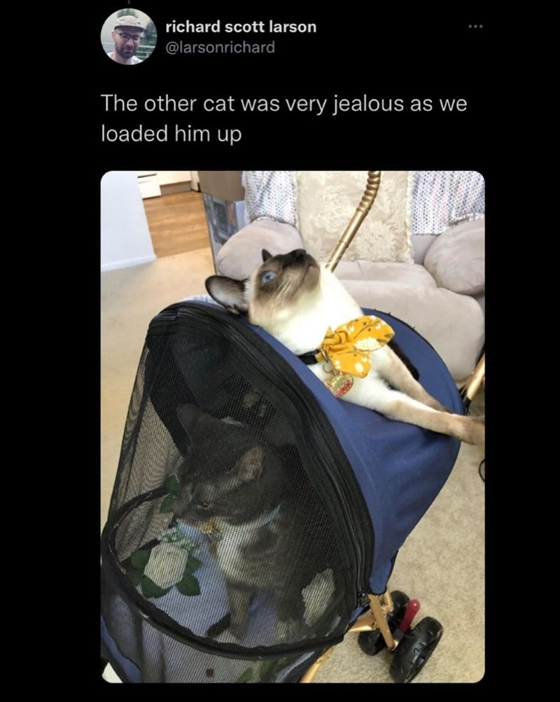 Font - richard scott larson @larsonrichard The other cat was very jealous as we loaded him up