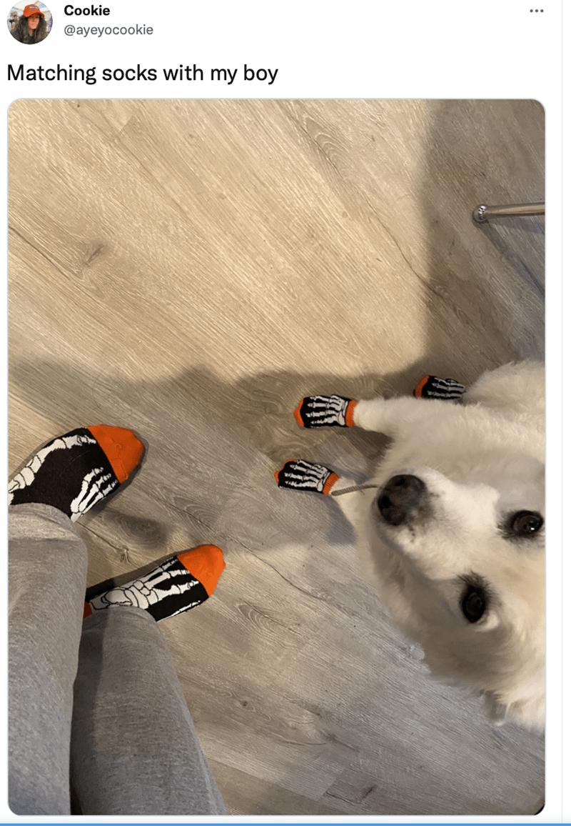 Dog - Cookie @ayeyocookie Matching socks with my boy