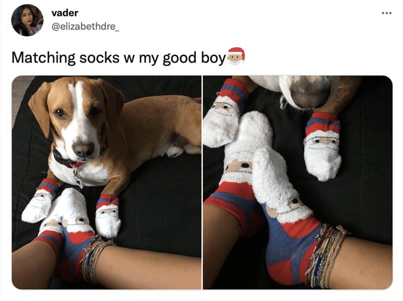 Dog - vader ... @elizabethdre_ Matching socks w my good boy
