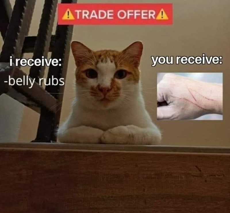 Cat - ATRADE OFFERA i receive: -belly rubs you receive: