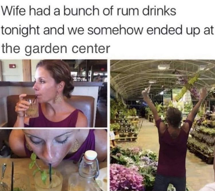 Plant - Wife had a bunch of rum drinks tonight and we somehow ended up at the garden center