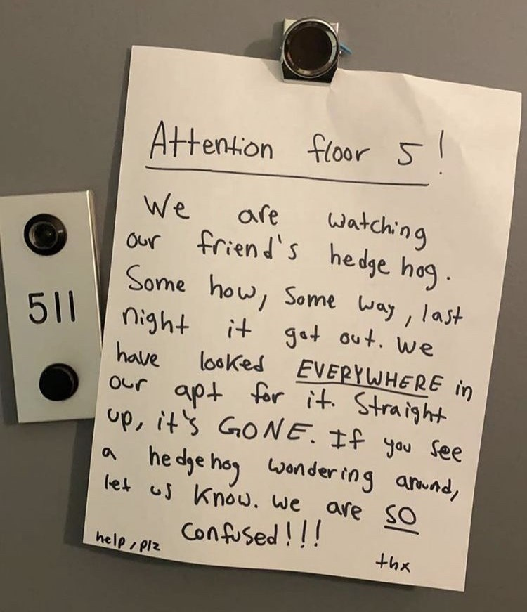 Handwriting - apt for it. Straight Attention floor 5 We are watching friend's hedge hog. Some how, Some way, last Our 511 it got out. we EVERYWHERE in night have our apt for it. Straight up, it's GONE. If you See he dge hog wonder ing awnd, let us Knoww. we are SO Confused!! looked help/ Piz thx