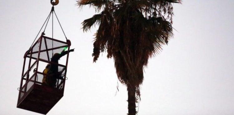 Cat stuck on palm tree