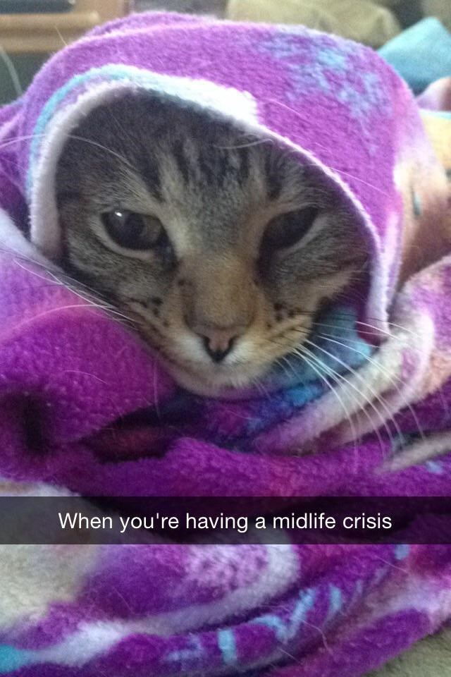 Cat - When you're having a midlife crisis