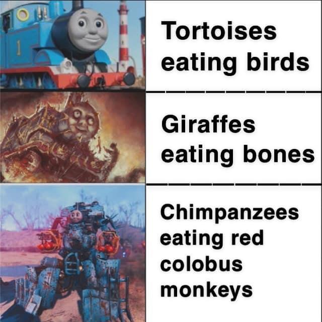 World - Tortoises eating birds Giraffes eating bones Chimpanzees eating red colobus monkeys