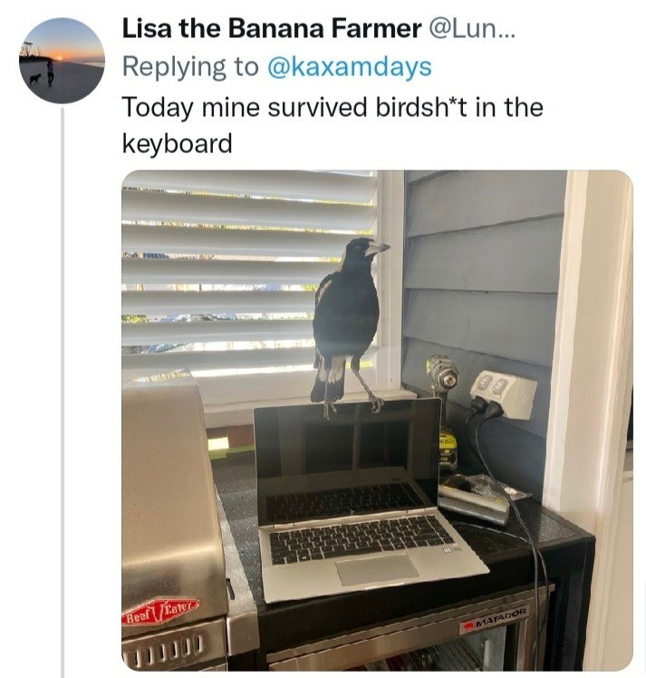 Laptop - Lisa the Banana Farmer @Lun... Replying to @kaxamdays Today mine survived birdsh*t in the keyboard Beef Eater MATADOR
