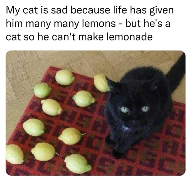 Cat - My cat is sad because life has given him many many lemons - but he's a cat so he can't make lemonade