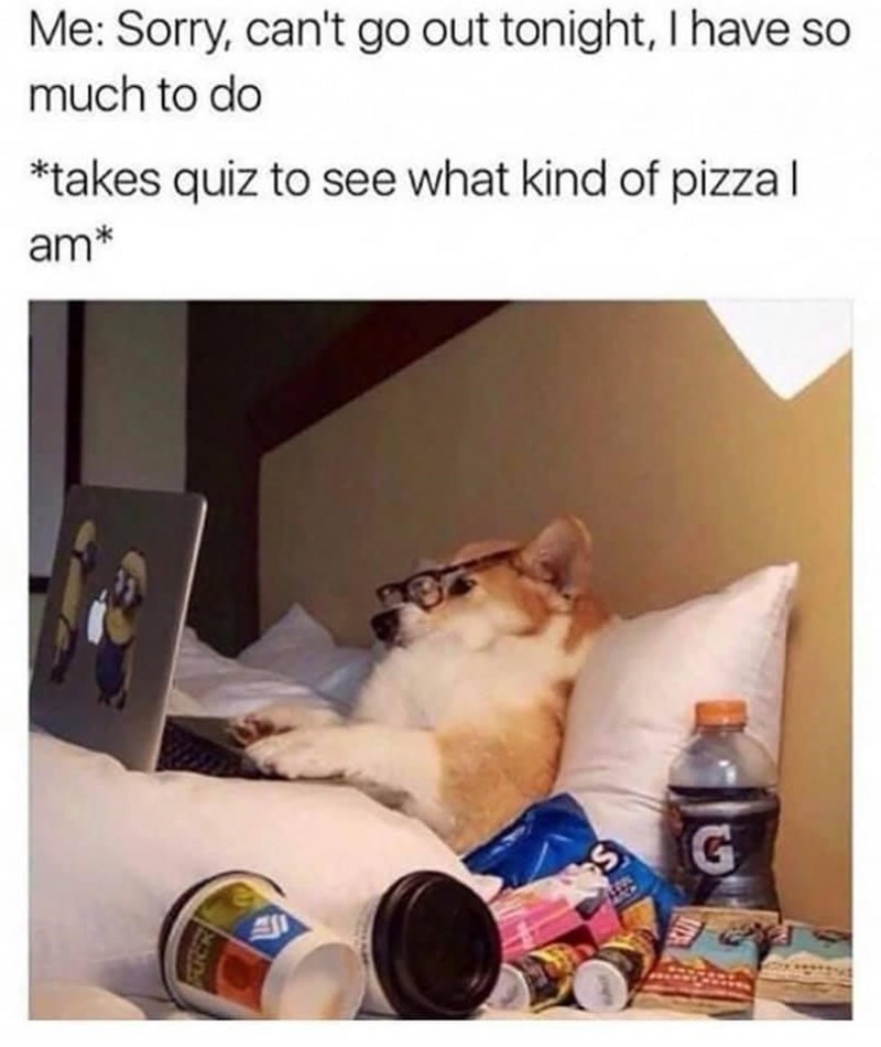 Product - Me: Sorry, can't go out tonight, I have so much to do *takes quiz to see what kind of pizzal am*
