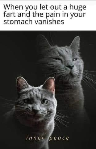 Cat - When you let out a huge fart and the pain in your stomach vanishes inner peace