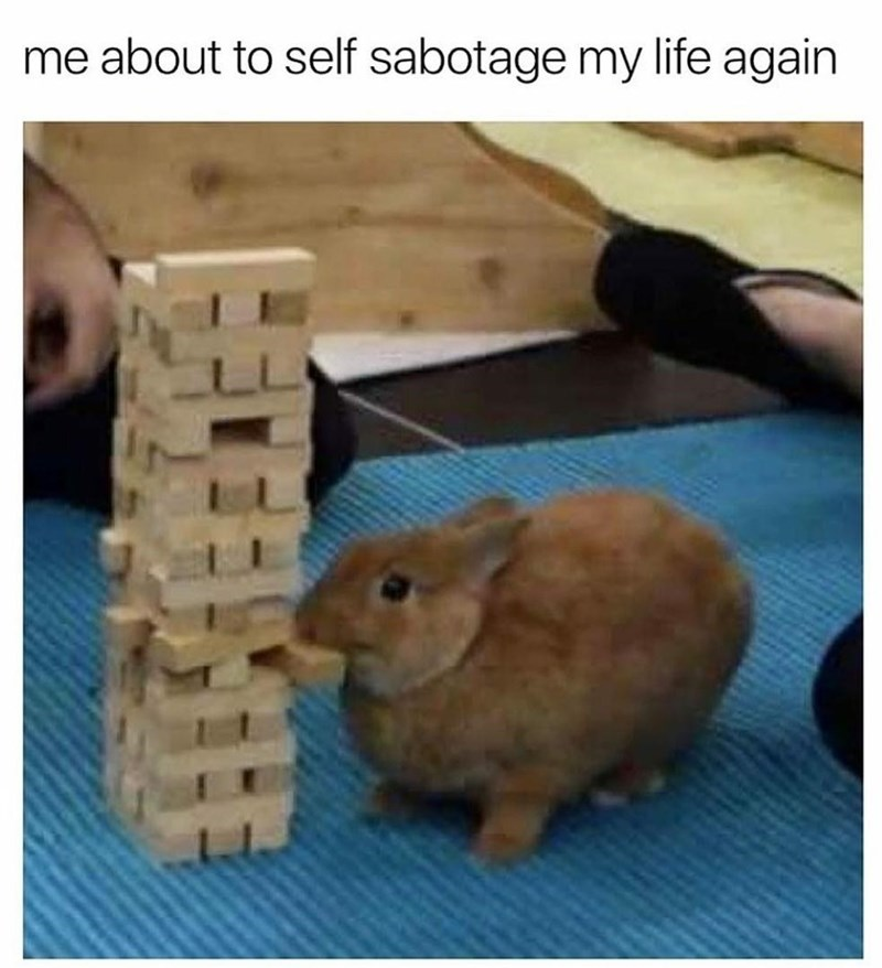 Rabbit - me about to self sabotage my life again