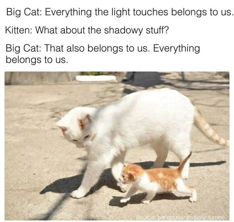 Cat - Big Cat: Everything the light touches belongs to us. Kitten: What about the shadowy stuff? Big Cat: That also belongs to us. Everything belongs to us. Source pixiebutterandjelly tumblr