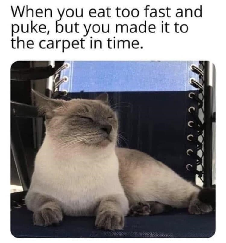 Cat - When you eat too fast and puke, but you made it to the carpet in time.