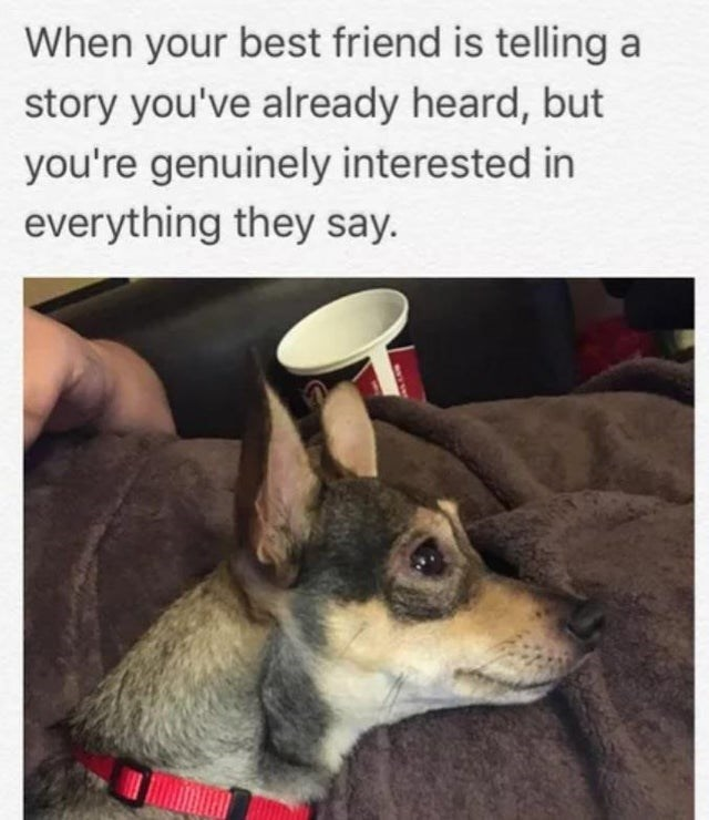 Dog - When your best friend is telling a story you've already heard, but you're genuinely interested in everything they say.