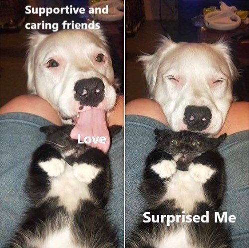 Dog - Supportive and caring friends Love Surprised Me