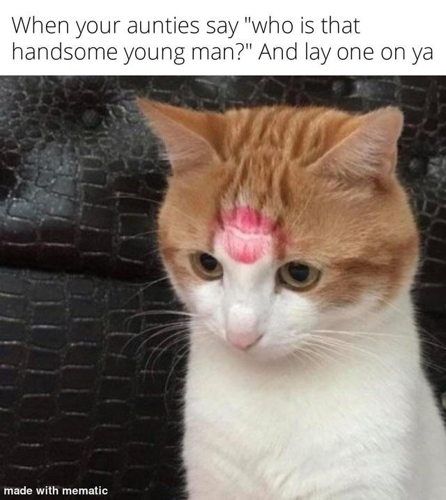 """Cat - When your aunties say """"who is that handsome young man?"""" And lay one on ya made with mematic"""