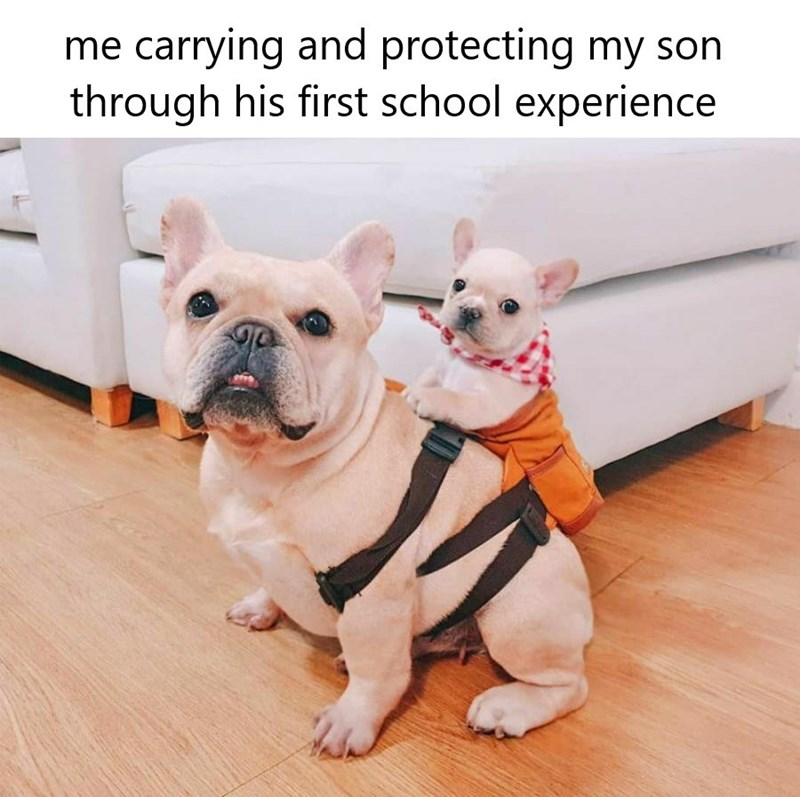 Dog - me carrying and protecting my son through his first school experience