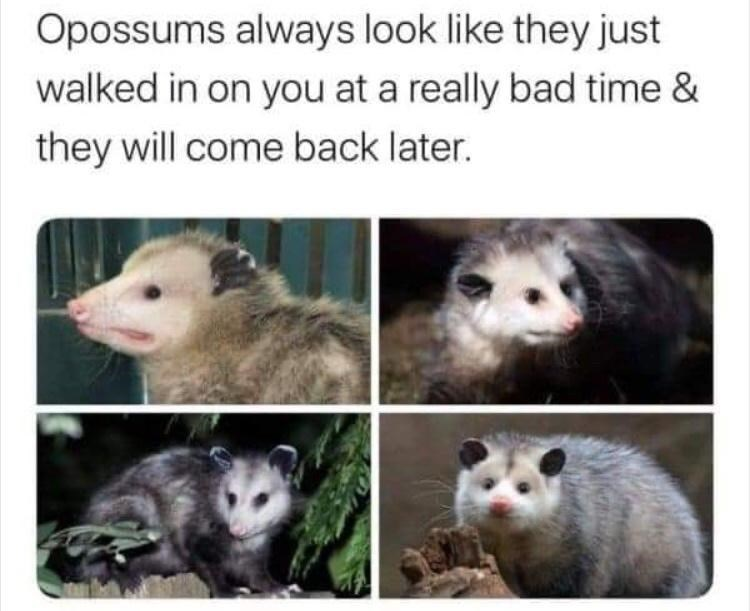 Photograph - Opossums always look like they just walked in on you at a really bad time & they will come back later.