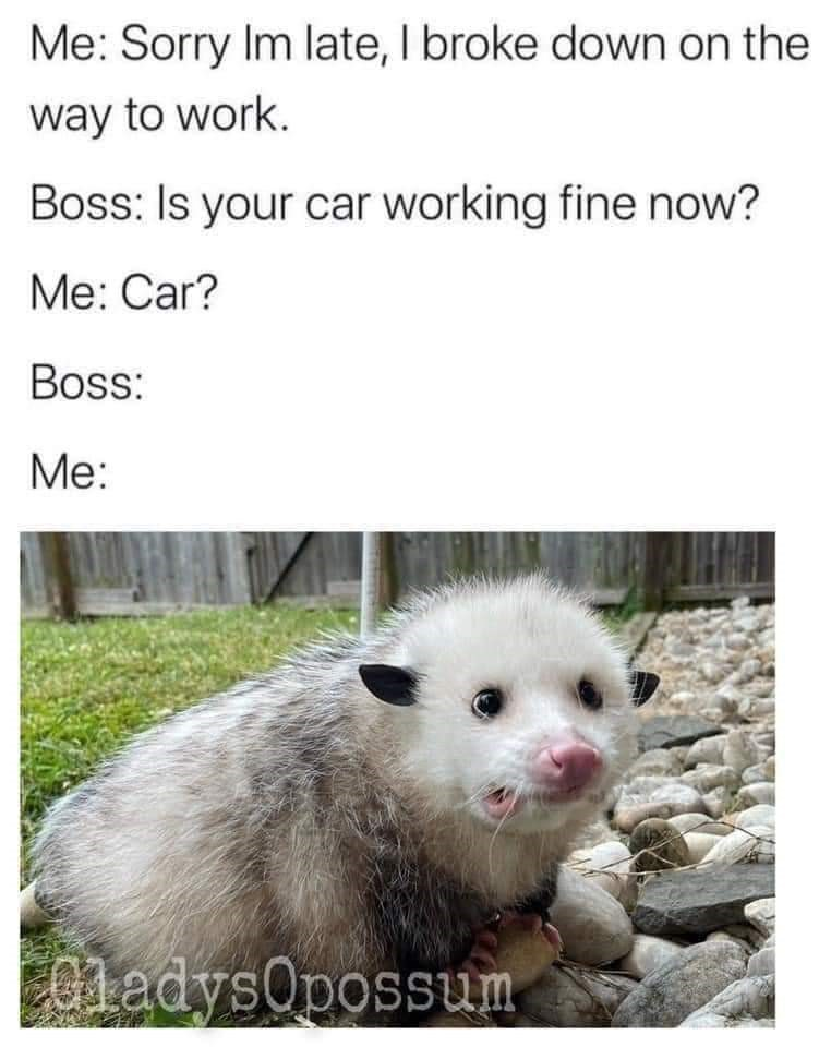 Nature - Me: Sorry Im late, I broke down on the way to work. Boss: Is your car working fine now? Me: Car? Boss: Ме: 01adysOpossum