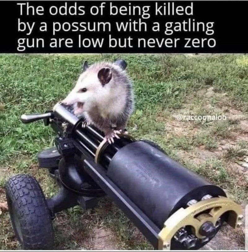Photograph - The odds of being killed by a possum with a gatling gun are low but never zero oraccoonalob