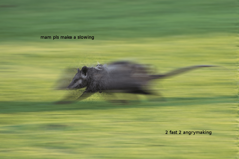 Bird - mam pls make a slowing 2 fast 2 angrymaking