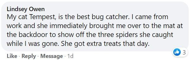 Rectangle - Lindsey Owen My cat Tempest, is the best bug catcher. I came from work and she immediately brought me over to the mat at the backdoor to show off the three spiders she caught while I was gone. She got extra treats that day. Like · Reply Message 1d
