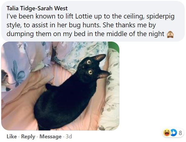 Cat - Talia Tidge-Sarah West I've been known to lift Lottie up to the ceiling, spiderpig style, to assist in her bug hunts. She thanks me by dumping them on my bed in the middle of the night Like · Reply · Message 3d