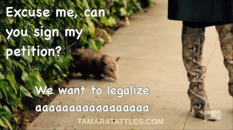 Plant - Excuse me, can you sign my petition? We want to legalize aaaaaaaaaaaaaaaaa br o TAMARATATTLES.COM