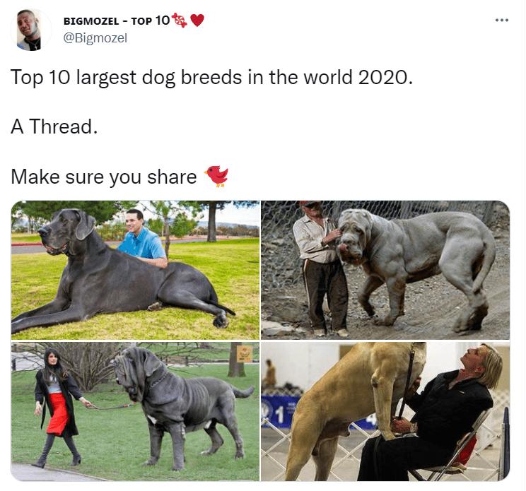 Outerwear - BIGMOZEL - TOP 10 @Bigmozel Top 10 largest dog breeds in the world 2020. A Thread. Make sure you share
