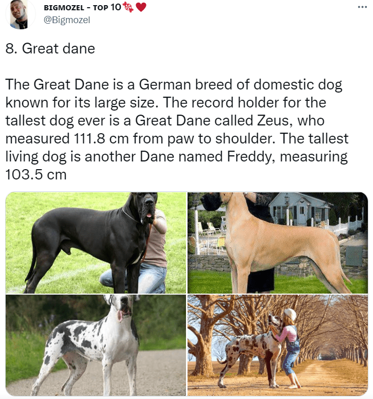Dog - BIGMOZEL - TOP 10 @Bigmozel ... 8. Great dane The Great Dane is a German breed of domestic dog known for its large size. The record holder for the tallest dog ever is a Great Dane called Zeus, who measured 111.8 cm from paw to shoulder. The tallest living dog is another Dane named Freddy, measuring 103.5 cm