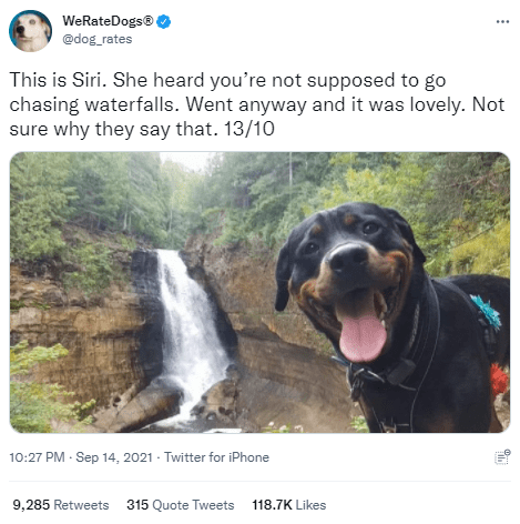 Dog - WeRateDogs® @dog_rates This is Siri. She heard you're not supposed to go chasing waterfalls. Went anyway and it was lovely. Not sure why they say that. 13/10 10:27 PM - Sep 14, 2021 - Twitter for iPhone 9,285 Retweets 315 Quote Tweets 118.7K Likes