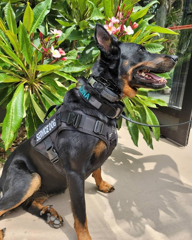 Dog - SERVICE DOG ONA