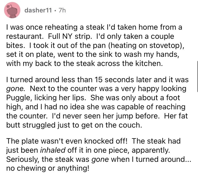 Font - dasher11 · 7h I was once reheating a steak l'd taken home from a restaurant. Full NY strip. I'd only taken a couple bites. I took it out of the pan (heating on stovetop), set it on plate, went to the sink to wash my hands, with my back to the steak across the kitchen. I turned around less than 15 seconds later and it was gone. Next to the counter was a very happy looking Puggle, licking her lips. She was only about a foot high, and I had no idea she was capable of reaching the counter. l'